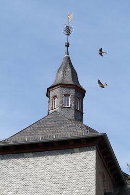Turmfalken in Siegen
