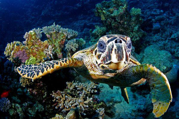-_-_- Turtle -_-_-