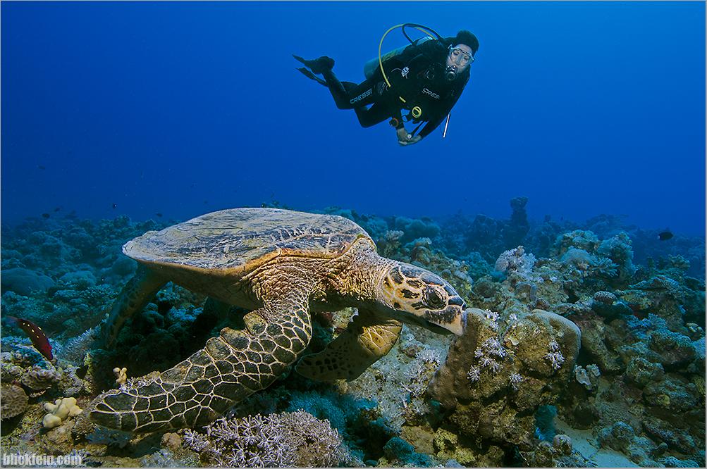 ~turtle~