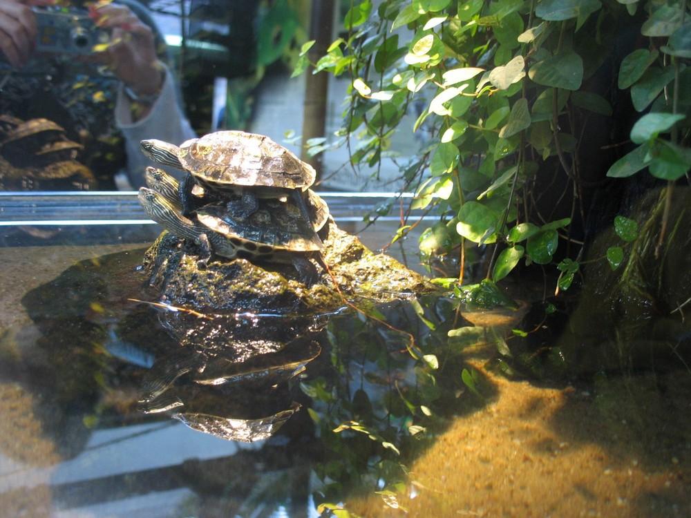 Turtle Midi Tower