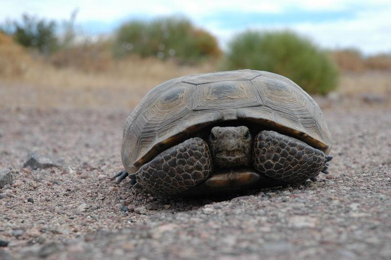 Turtle on tour