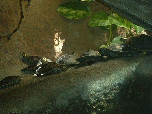 Turtle orgy?????