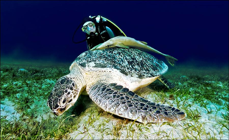 turtle-turtle (upload)