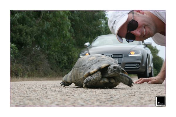 Turtle vs Audi TTS