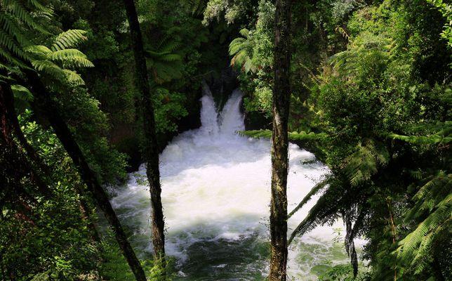 Tutea Falls am Okere Falls Track