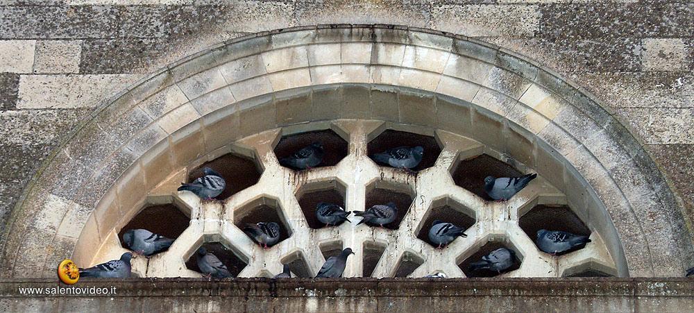 Tutto occupato - Piccion's Residence a Sogliano Cavour (Le)