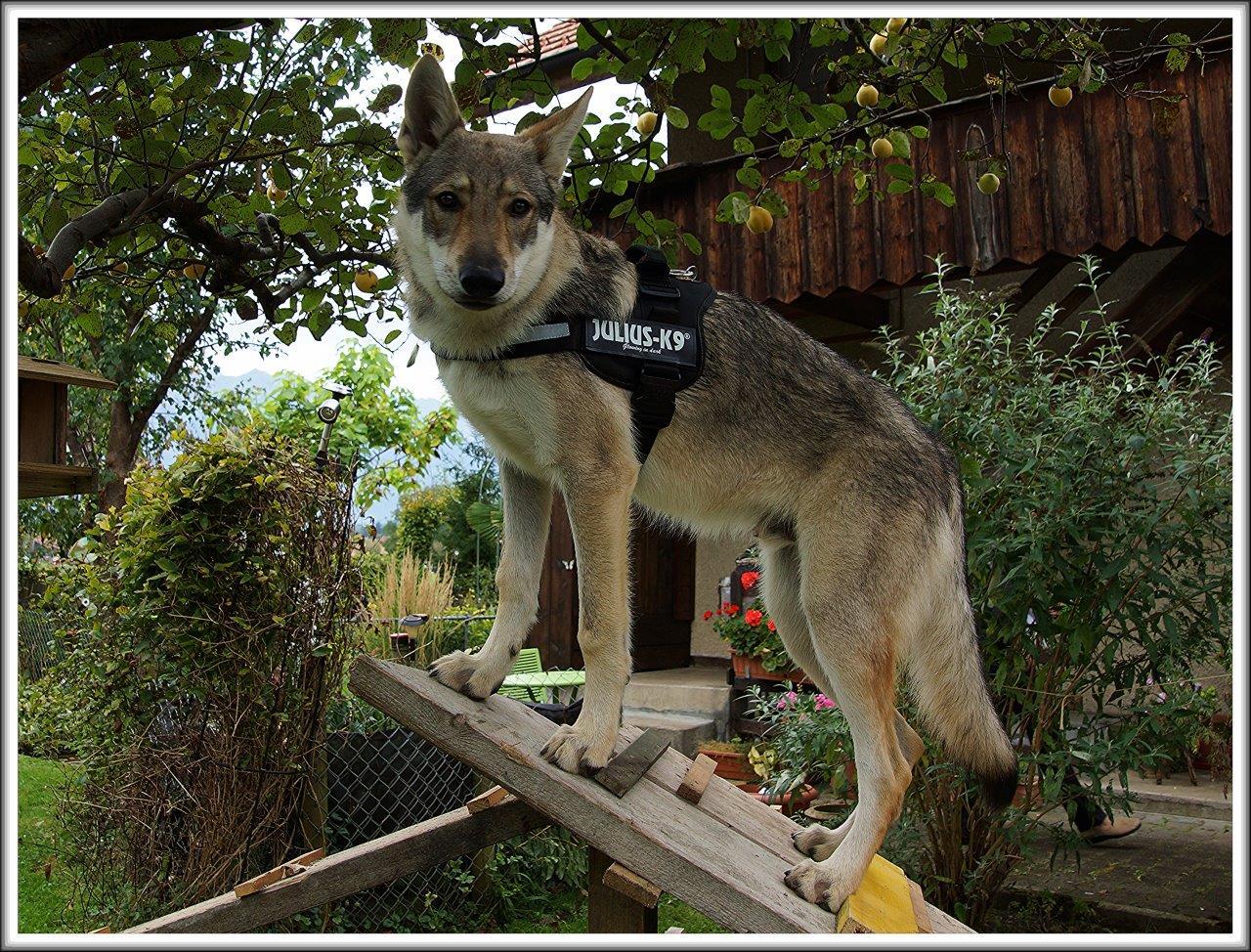 TWH , der power Hund .
