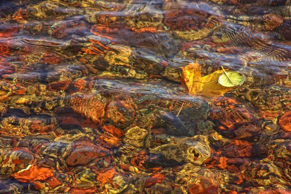 Two fall leaves on water