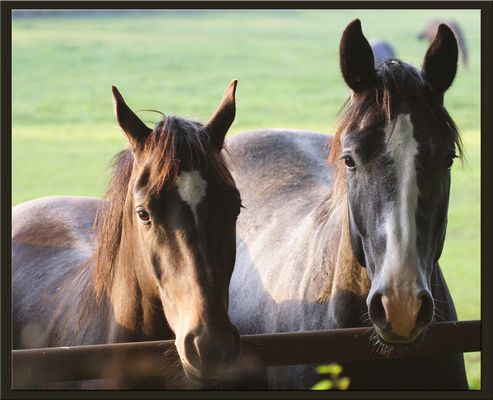 """""""Two Horses - Horses Two"""""""