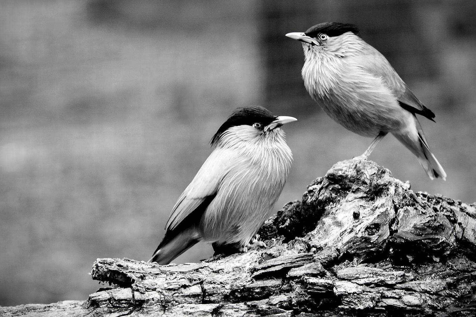 * * * TWO ODD BIRDS * * *