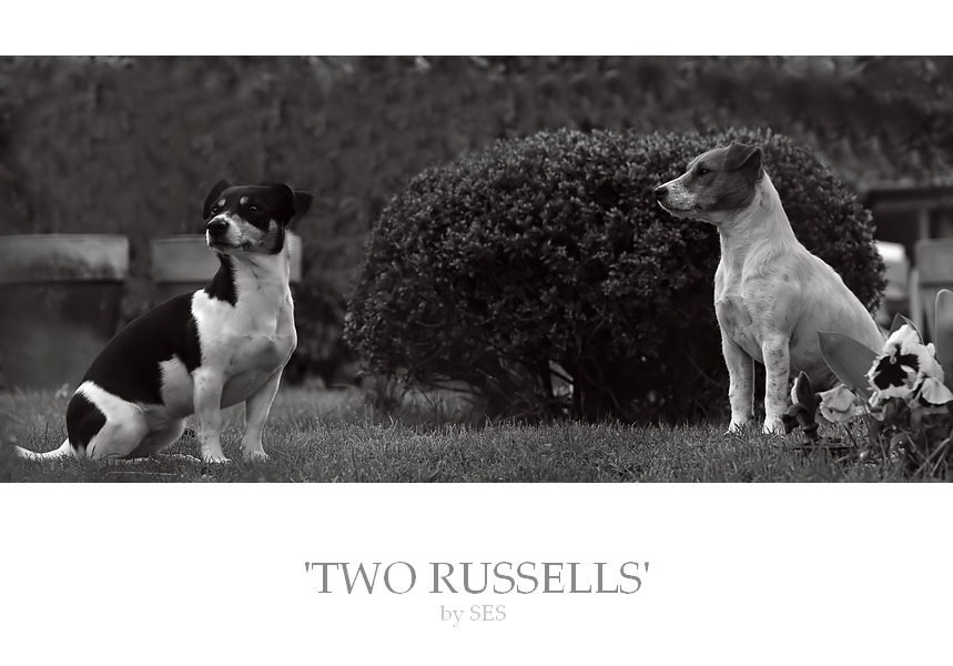 ' TWO RUSSELLS'