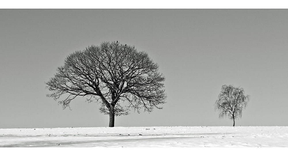 two trees in snow (Reload)
