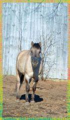 Tybet - little horse ;)