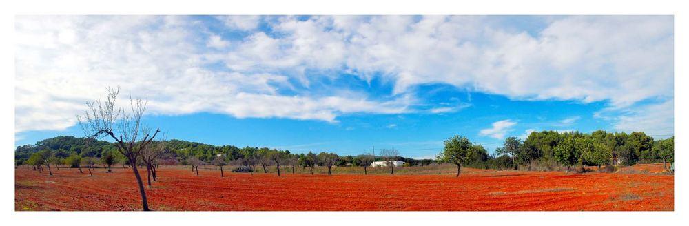 Typical Eivissa Landscape - between Santa Gertrudis and Sant Mateu d'Aubarca