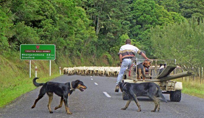 Typisch NZ (2)