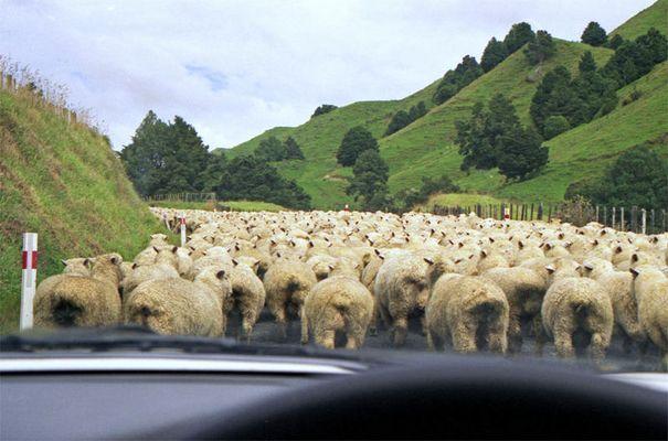 Typisch NZ