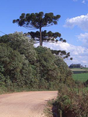 Typische Landschaft in Süd Brasilien