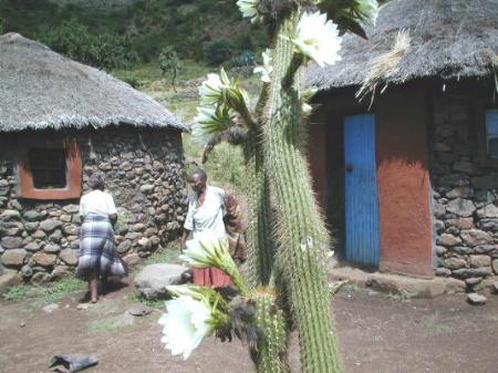 typische Rundhütten in Lesotho