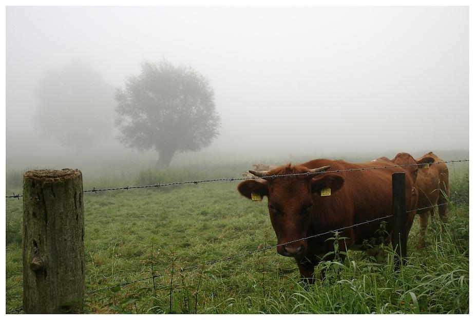 Typischer Spätsommermorgen am Niederrhein