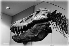 Tyrannosaurus Rex - 1 -