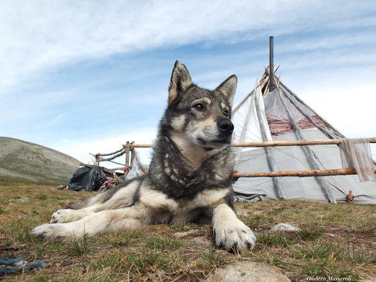 Tzaatan village - Mongolia