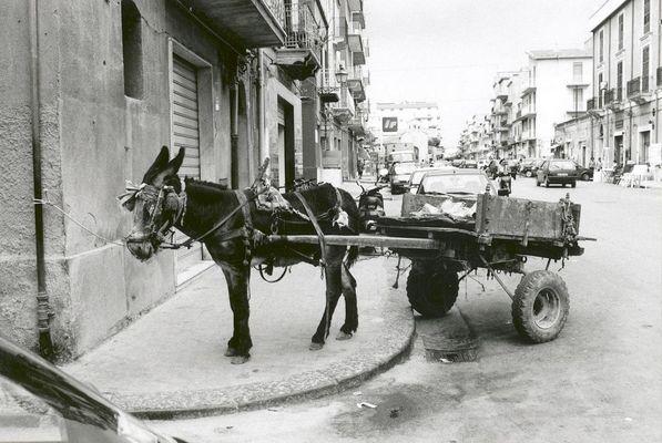 u sciccareddu - Transportesel auf Sizilien Licata 2002