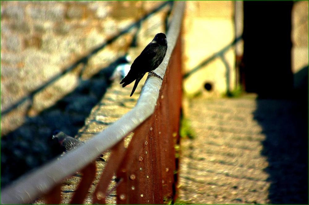 Uccelletti liberi.