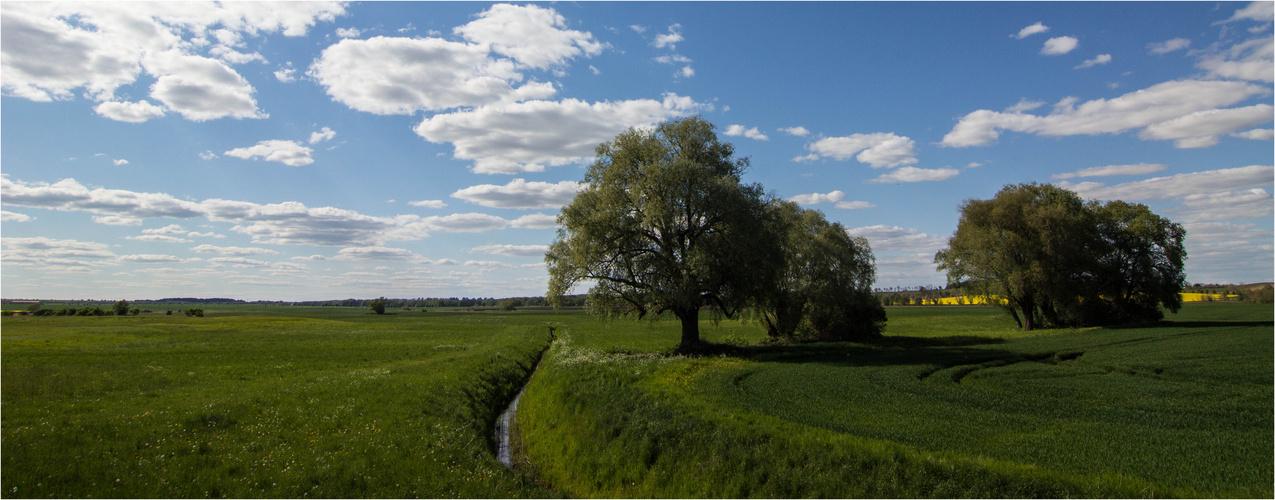 Uckermark - Grün