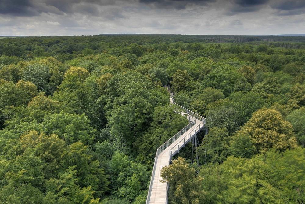 Über dem Blätterwald