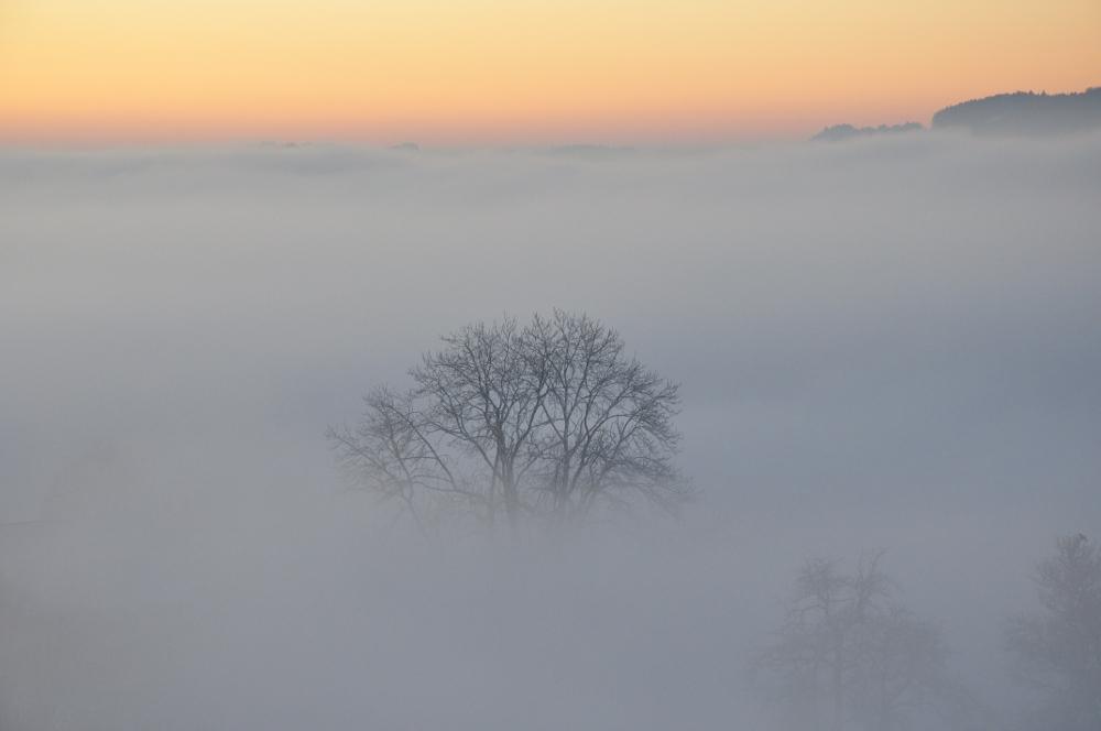 Über dem Nebel.