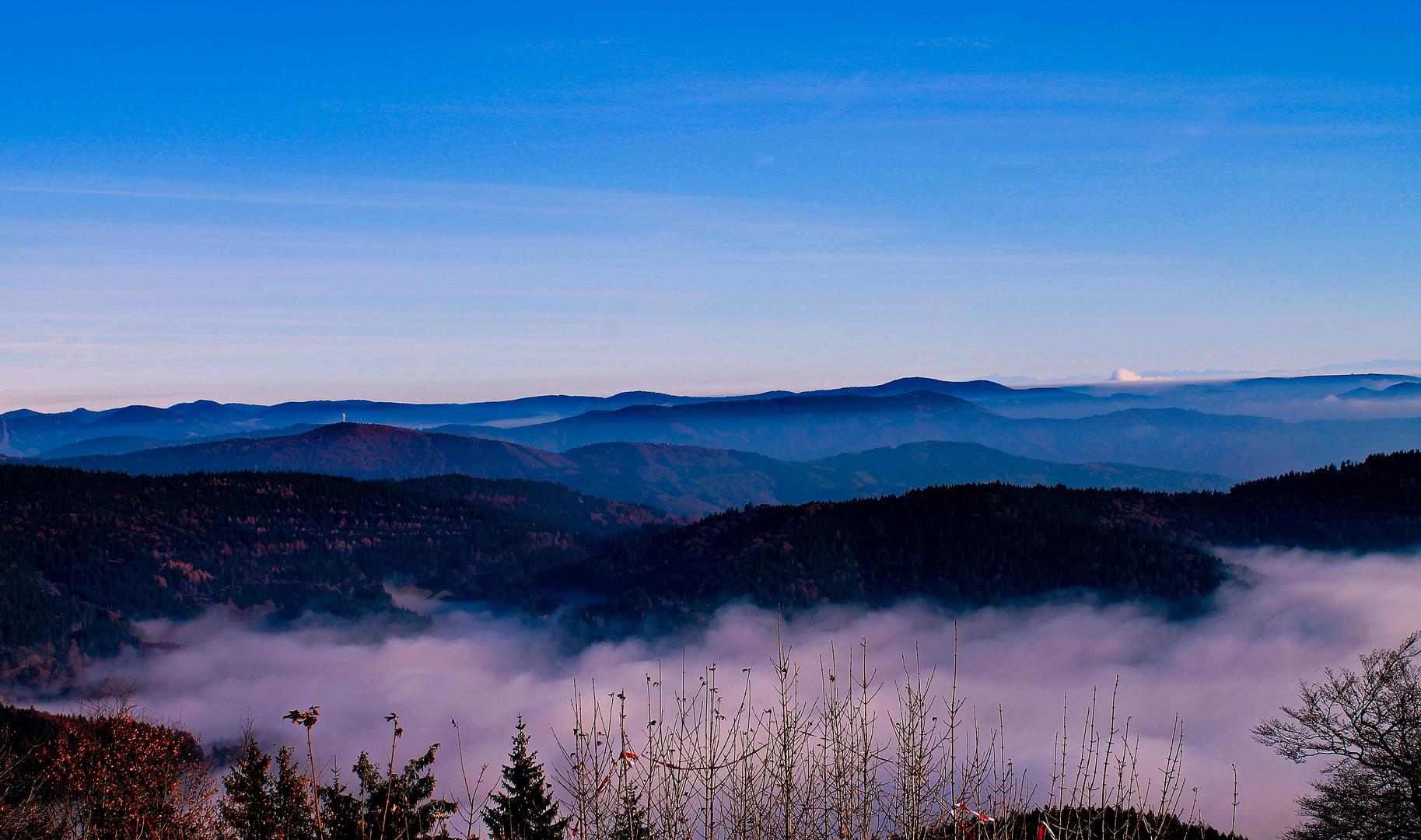 Über dem Nebelwald
