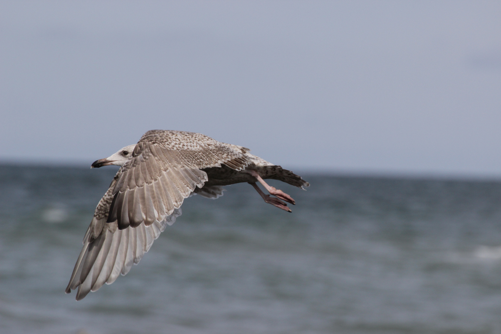 Über dem Strand von Lönstrup (nordliches Dänemark)