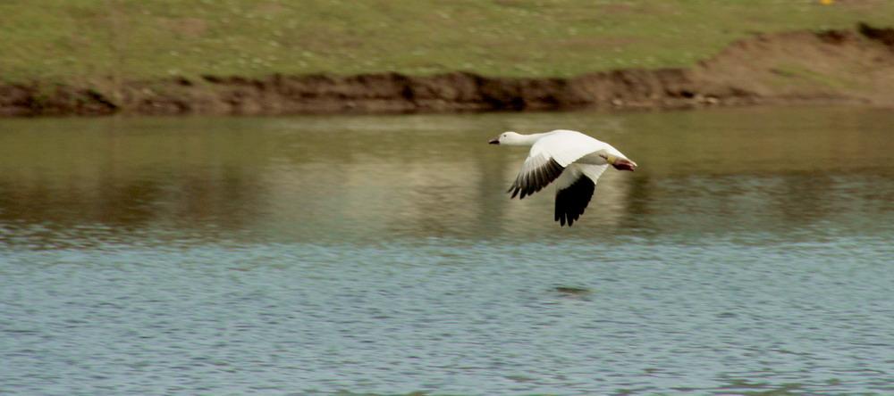 Über dem Teich