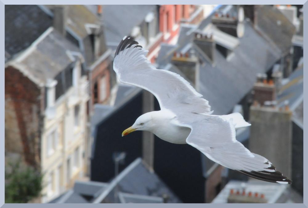 Über den Dächern von Le Treport...