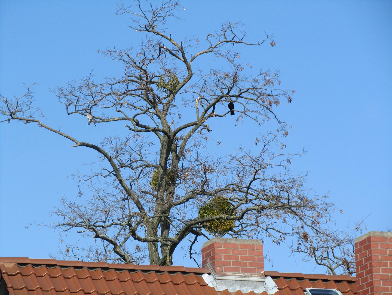 Über den Dächern von Worms......
