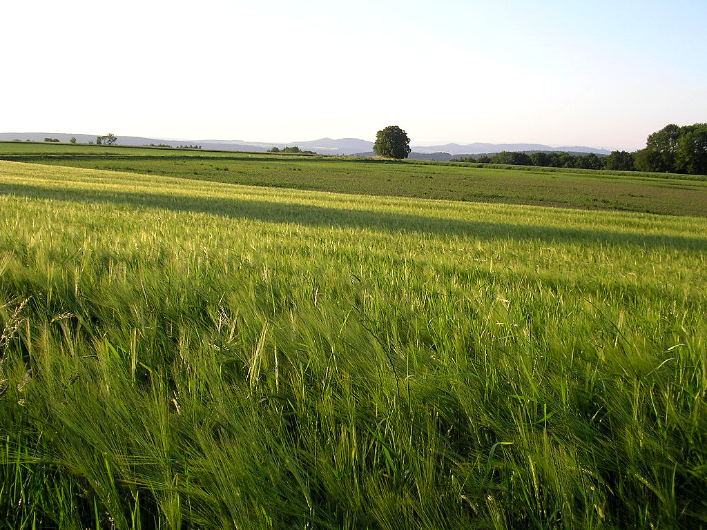 Über den Feldern