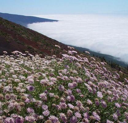 Über den Passatwolken (Teneriffa)