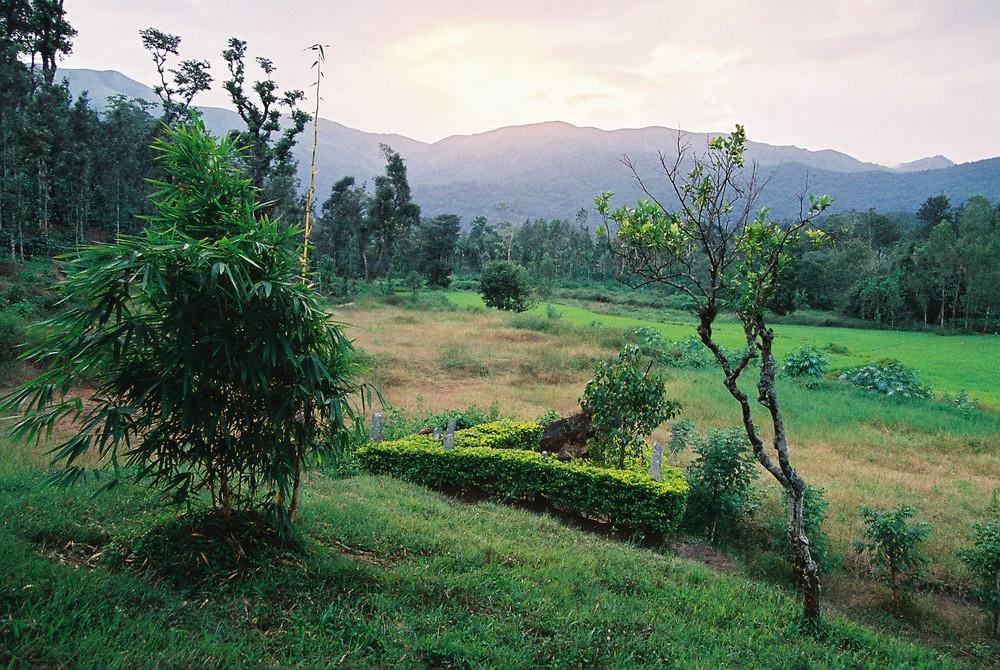 Über den Reisfeldern
