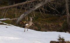 Über den Schnee Flieger :-)