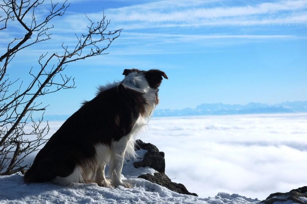 ...über den Wolken...alles im Blick...