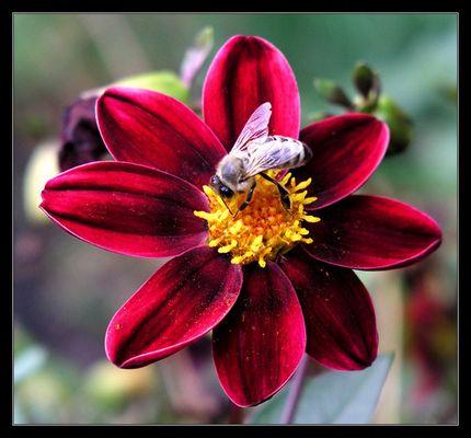 über die Bienchen und die Blümchen
