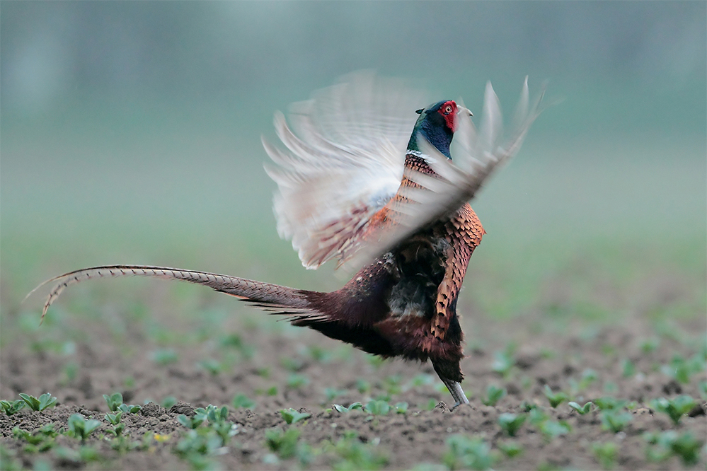 über die Flügel
