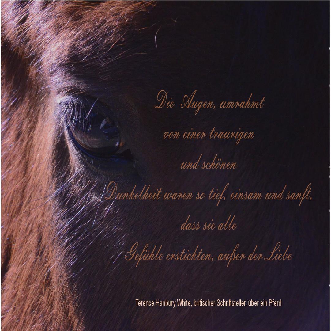 Über ein Pferd ...!