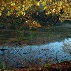 über goldenen Teich, noch einmal