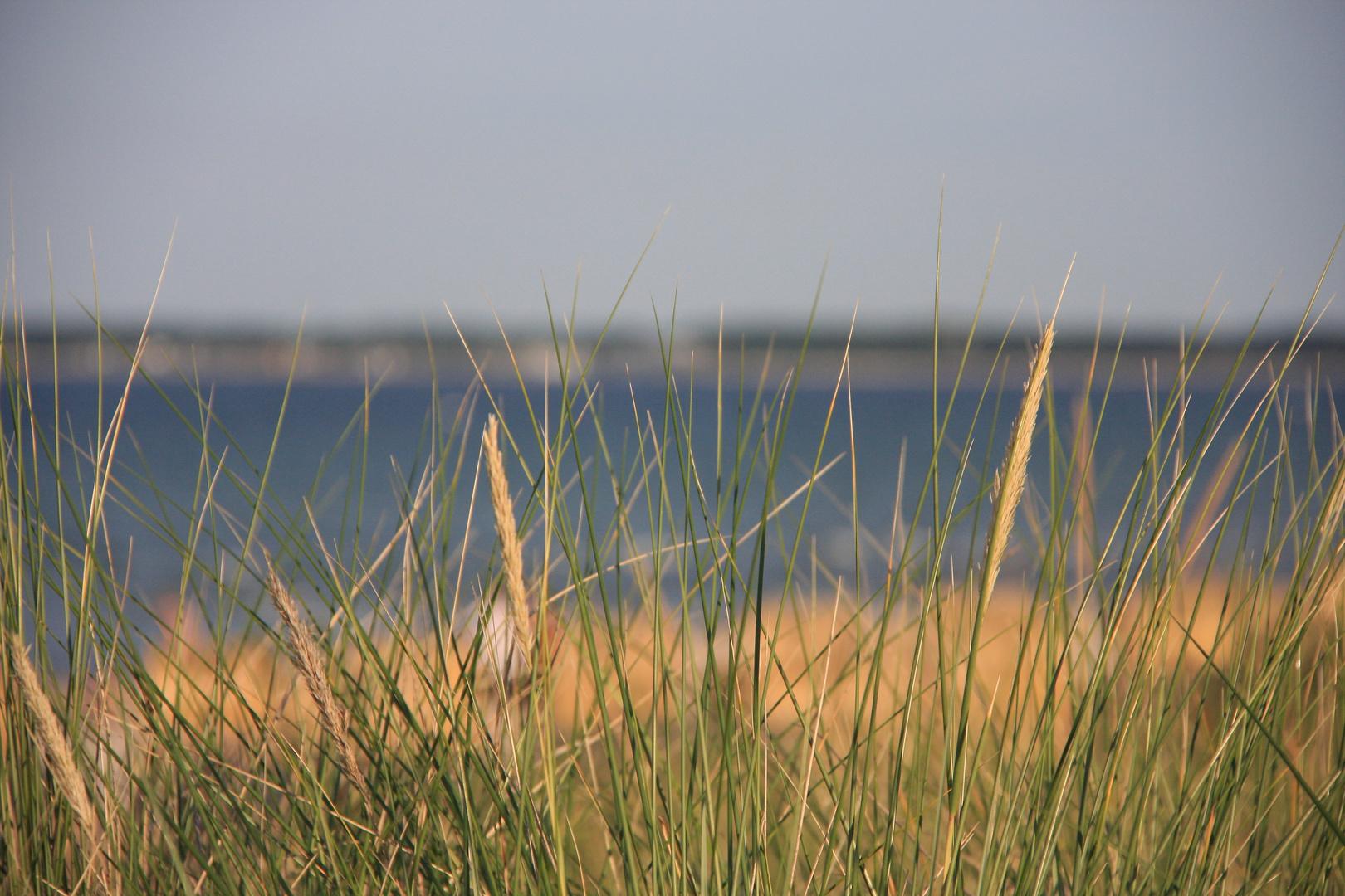 über gräser weht der wind