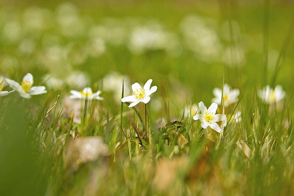 Überall Frühling