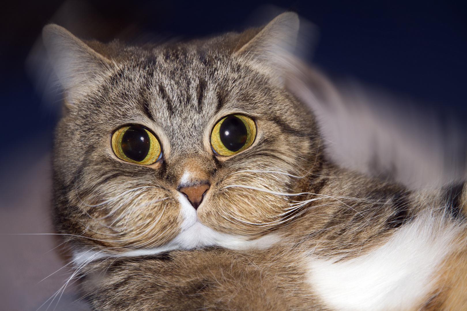 Überdosis Katzenminze