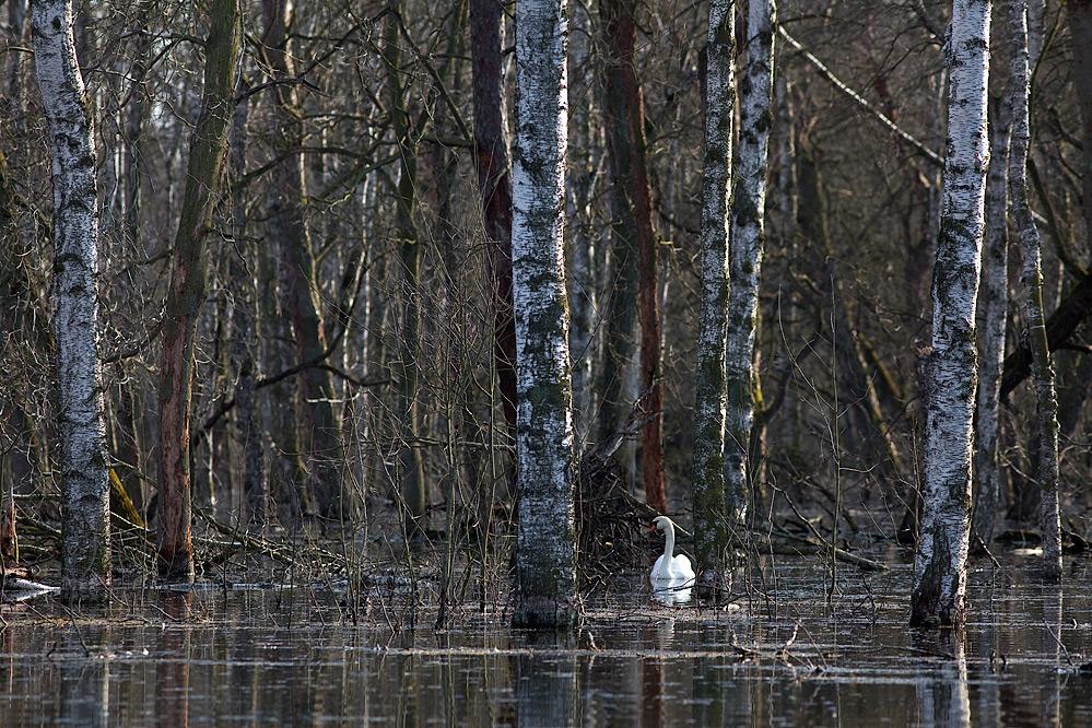 Überflutet..