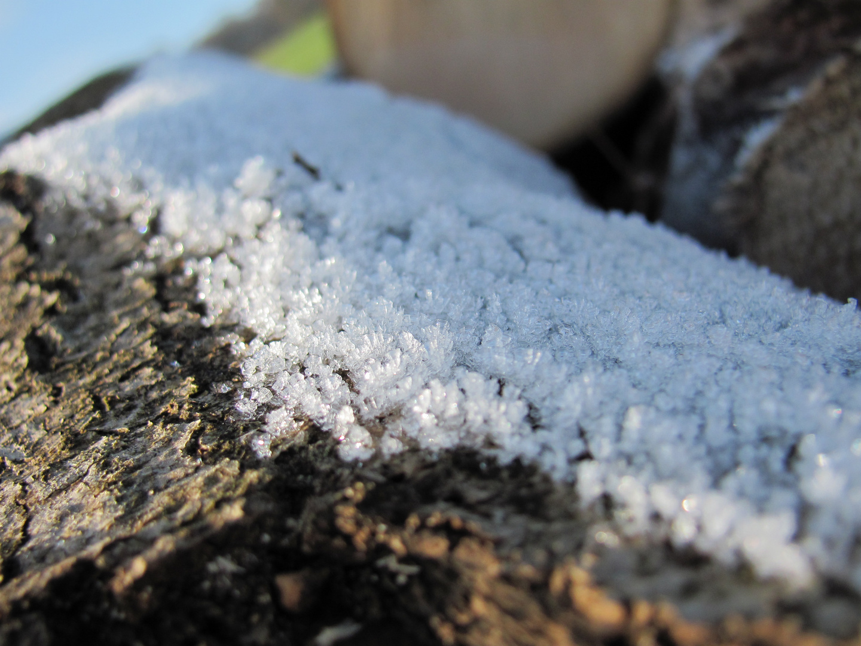 Überfrorener Baumstamm