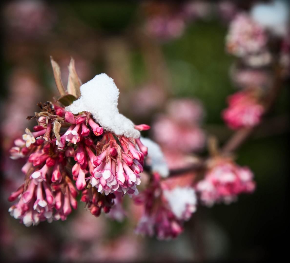 Übergang in den Frühling...